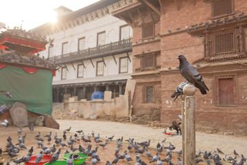 Pigeon in Durbar Square Kathmandu Nepal