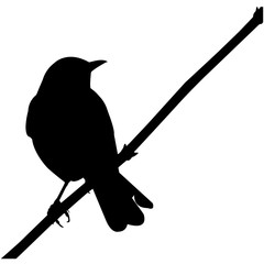 Mocking bird Silhouette Vector Graphics