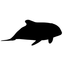 Orca Silhouette Vector Graphics