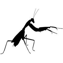 Praying mantis Silhouette Vector Graphics