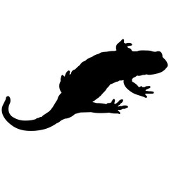 Salamander Stock Illustrations And Cartoons | Getty Images |Salamander Silhouette