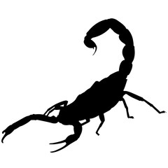 Scorpion Silhouette Vector Graphics