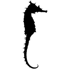 Sea horse Silhouette Vector Graphics