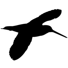 Snipe Silhouette Vector Graphics