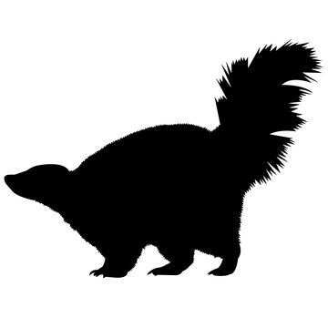 Skunk Silhouette Vector Graphics