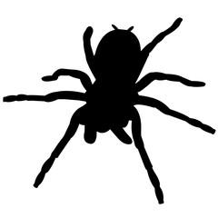 Tarantula Silhouette Vector Graphics