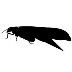Termite Silhouette Vector Graphics