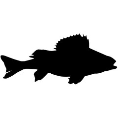 Yellow perch Silhouette Vector Graphics