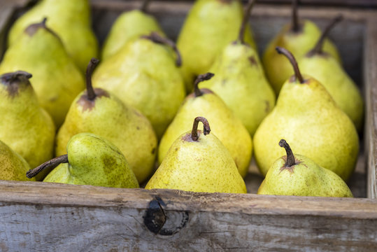 Yellow Williams (Bartlett) pears in wooden box, closeup, background. .Fresh organic fruit display at market, side view.