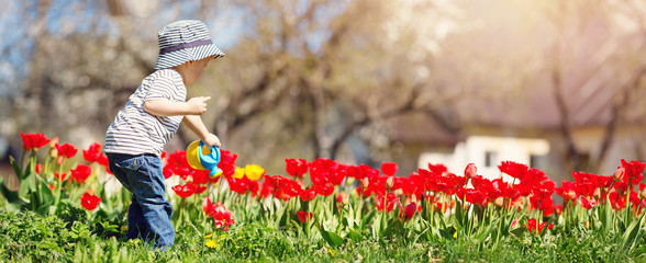 Little child watering tulips on the flower bed in beautiful spring day