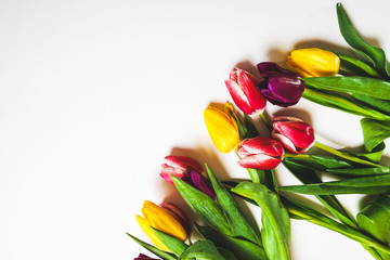 tulips of three different flowers lie on a white background