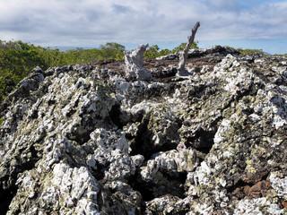 Black lava ropes, on the coast Isabela island Isabela, Galapagos, Ecuador