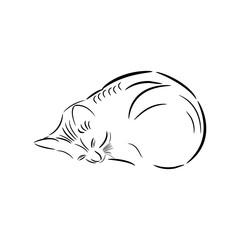 Kitten. Linear drawing in vector