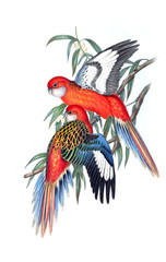 Illustration of parrot.