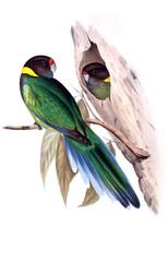 Illustration of parrot.