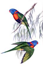 Illustration of bird.