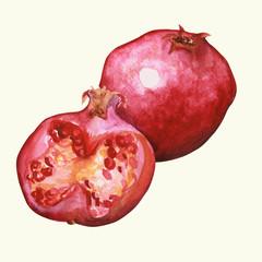 Owoc granat - ilustracja ręcznie malowana