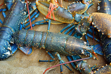 Blue Breton lobster at a seafood market in Brittany