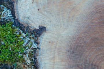 Holz mit Struktur als Hintergrund - Naturholz