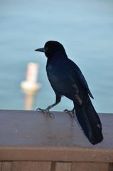 Black bird at ocean