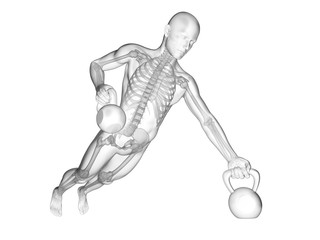 Person lifting kettle bells, skeletal system, illustration