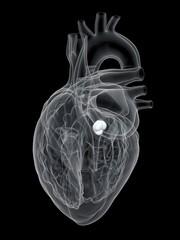 Human heart aortic valve, illustration