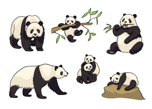 Set of Pandas- vector illustration