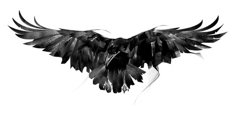drawn flying crow on white background front