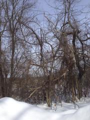 IMG_4948 Trees