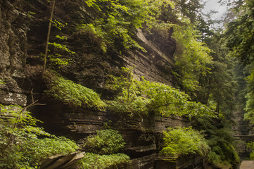 NYS Gorge in Summer 2