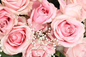 Big pink roses