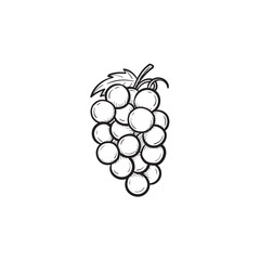 Vector hand drawn Bunch of grapes outline doodle icon. Bunch of grapes sketch illustration for print, web, mobile and infographics isolated on white background.