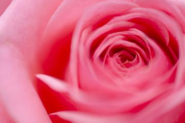 Roses Blur Valentine's Day