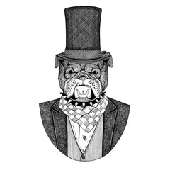 Bulldog, dog. Animal wearing jacket with bow-tie and silk hat, beaver hat, cylinder top hat. Elegant vintage animal. Image for tattoo, t-shirt, emblem, badge, logo, patch