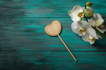White Orchid on blue wooden background