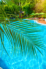 high, beautiful palm trees rostut poolside, around a luxury hotel. tropics asia