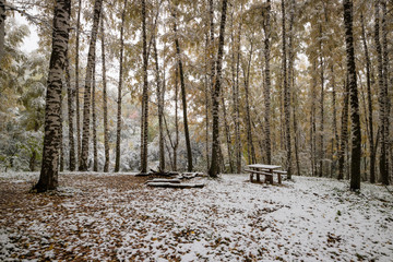The first snow in Birchwood