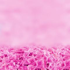 Hortensien - Hintergrund