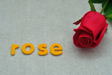 The word rose with a red rose on a white background