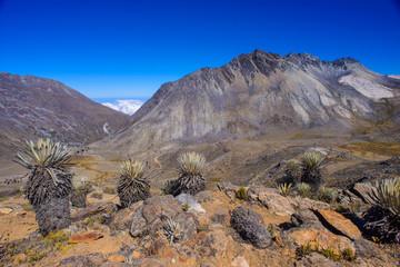 Tropical Andes Landscape