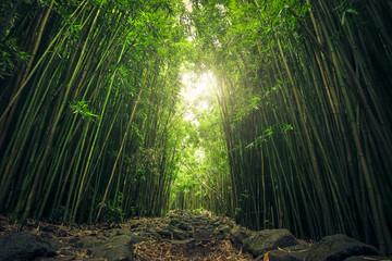 Düsterer Bambuswald, Haleakala Nationalpark, Maui