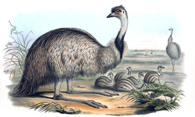 Ilustracja ptaka - 187207480