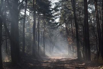 Aleja w jesiennym lesie spowitym mgłą