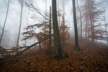 Dark forest in fog weather in autumn, little Carpathian, Slovakia, Europe