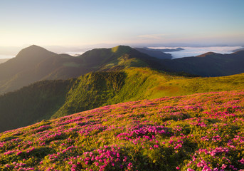 Flowes in the mountains during sunrise. Beautiful natural landscape in the summer time