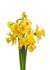 Papiers peints Narcisse Différentes variétés de narcisses