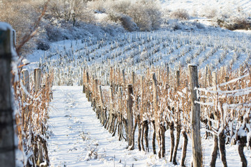 Door stickers White vineyard covered with snow in winter