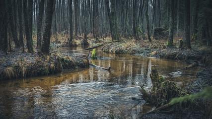 Quiet forest stream.