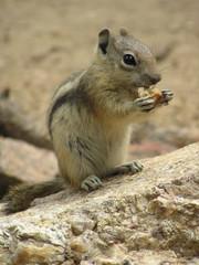 Squirrel Snack 2