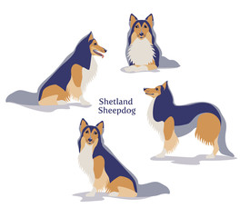 Vector illustration of Shetland Sheepdog or Shetland Collie in different poses isolated on white background.